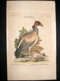 Edwards Seligmann C1760 Folio Hand Col Bird Print. Royal King Vulture